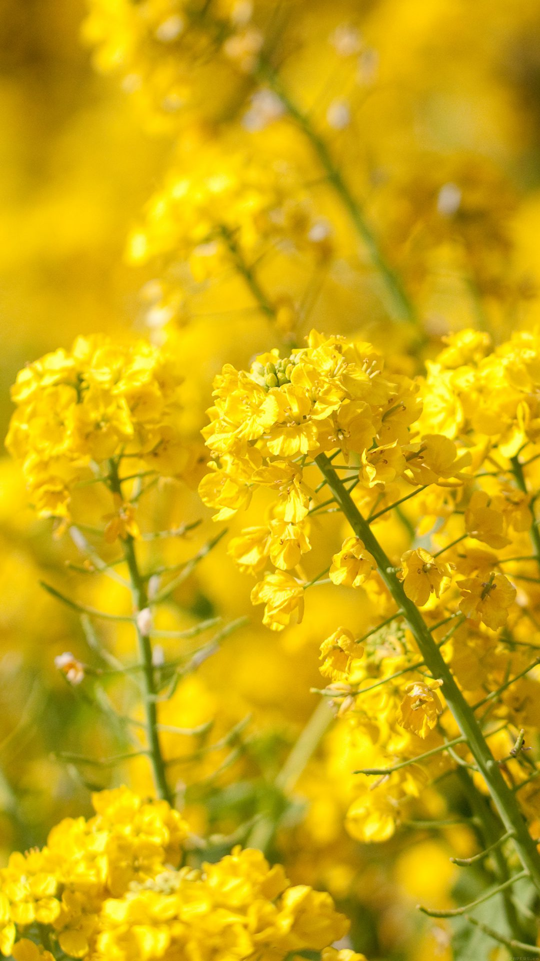 Yellow Flower Spring Fun Nature