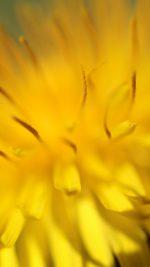 Yellow Flower Zoom Nature