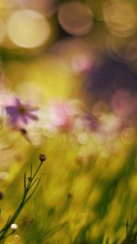 Flower Bokeh Spring Days Sweet