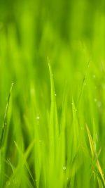 Lawn Flower Rain Bokeh Green