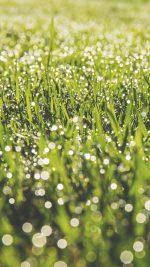 Lawn Green Spring Bokeh Light