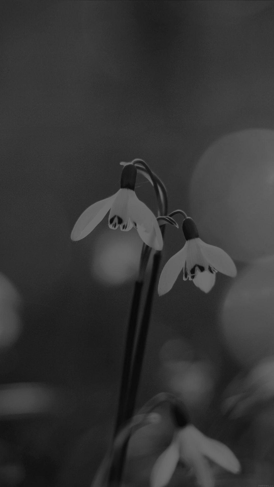 Uknown Flower Blue Bokeh Flare Dark Black Bw