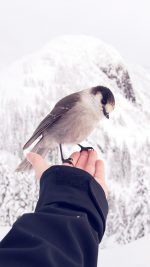 Bird In My Hand Snow Winter Cold Animal