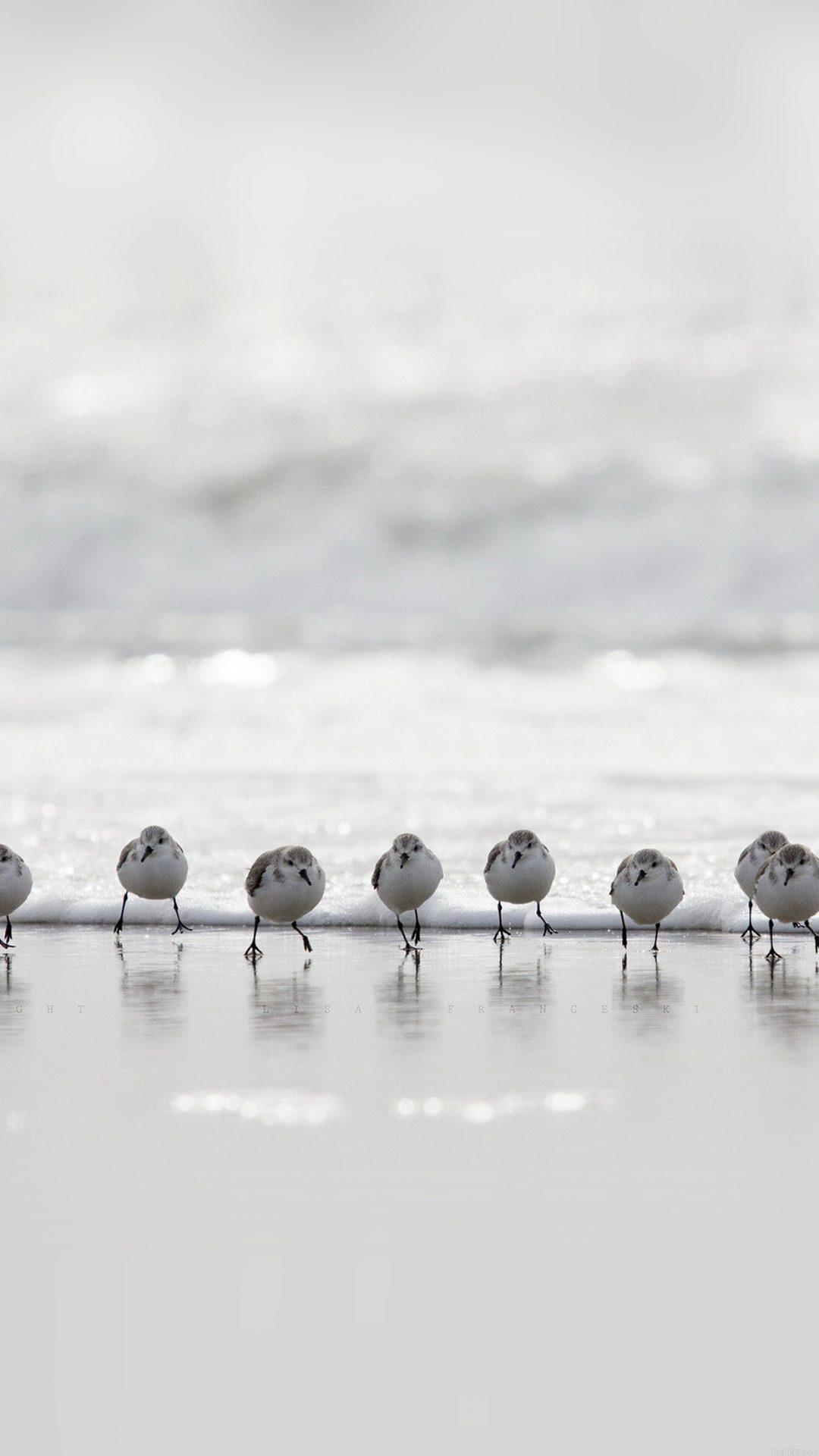 Birds Beach Wave Ocean Water Sea Nature Animal
