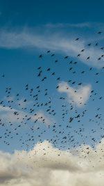 Birds Sky Animal Fly Blue Cloud Nature