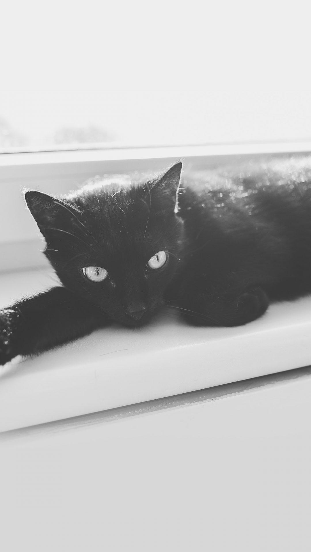 Black Cat Animal Cute Watchin