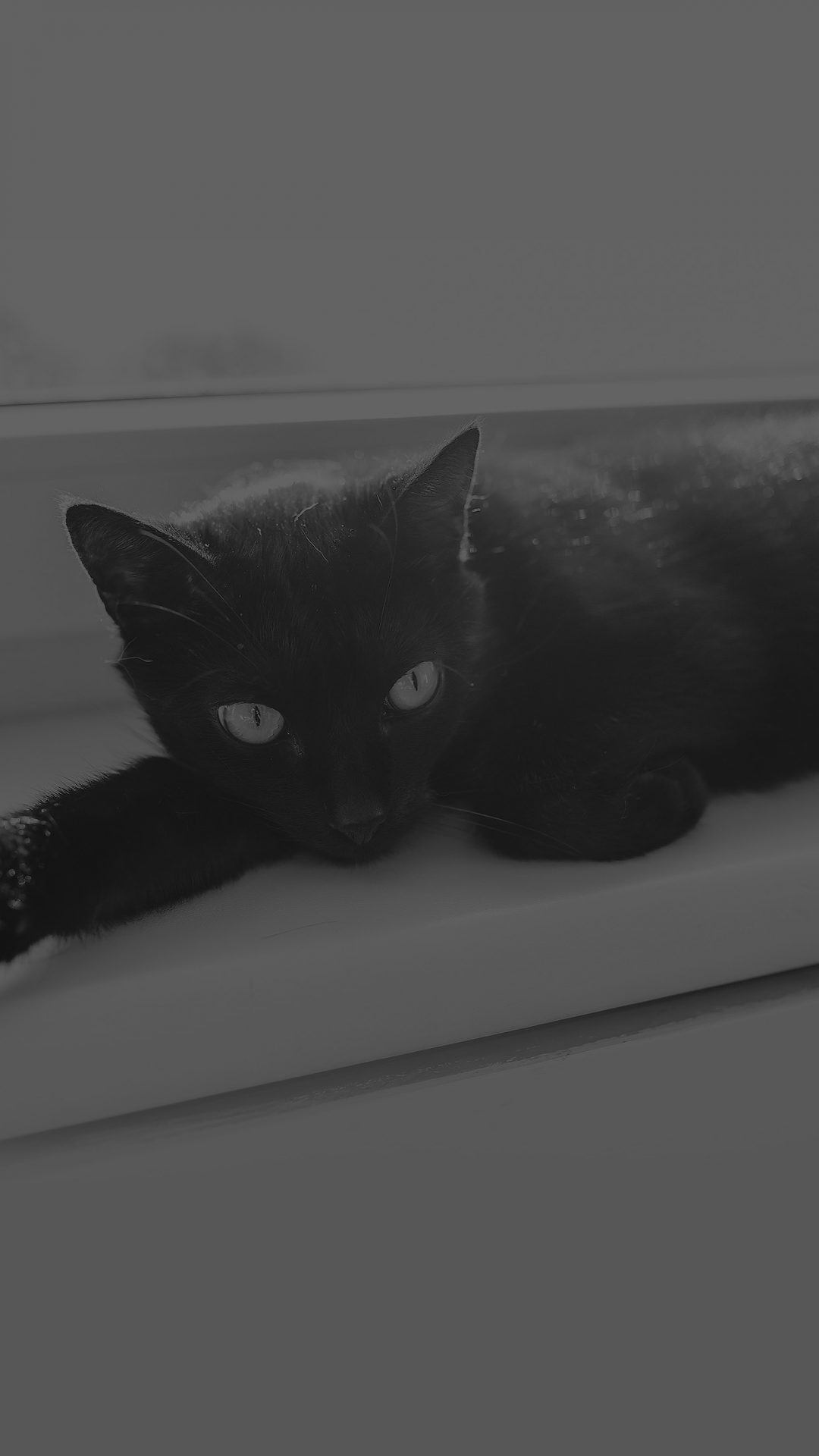 Black Cat Animal Cute Watching Dark Bw Wallpapers For Iphone