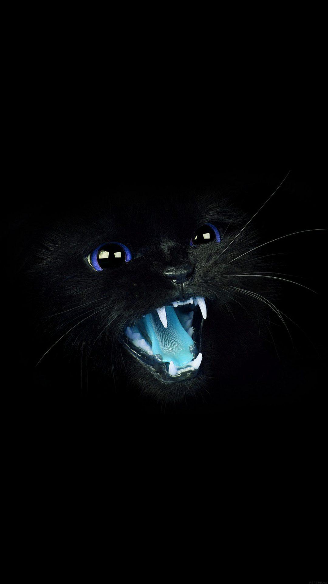 Black Cat Blue Eye Roar Animal Cute