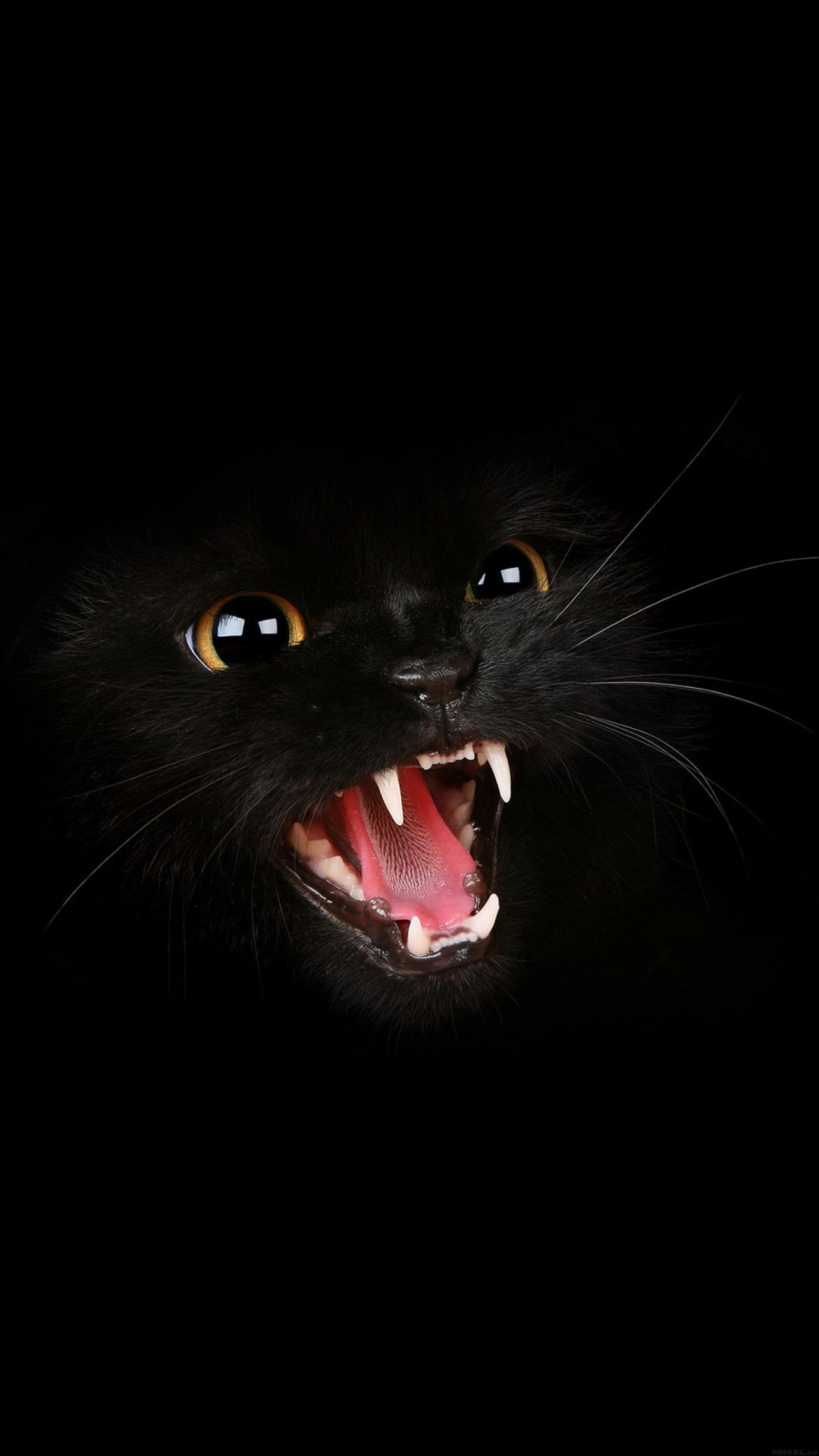 Black Cat Roar Animal Cute