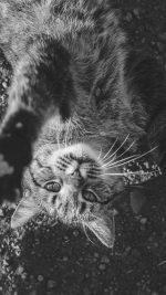 Cat Cute Dark Lying Animal Nature