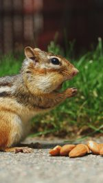 Chipmunk Eating Surprised Nature Animal