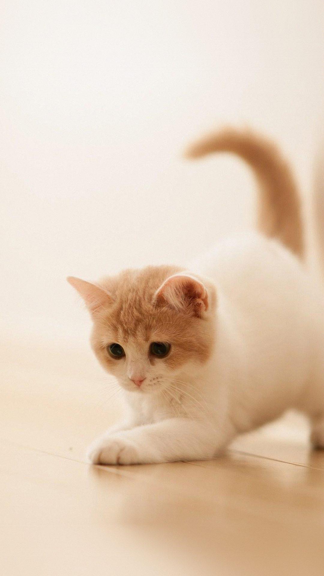 Cute Cat Kitten Animal