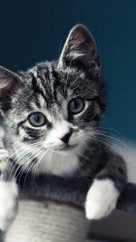 Cute Cat Look Animal Love Nature