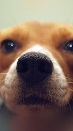 Cute Dog Animal Face