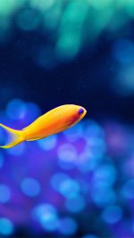 Cute Fish Ocean Sea Animal Nature
