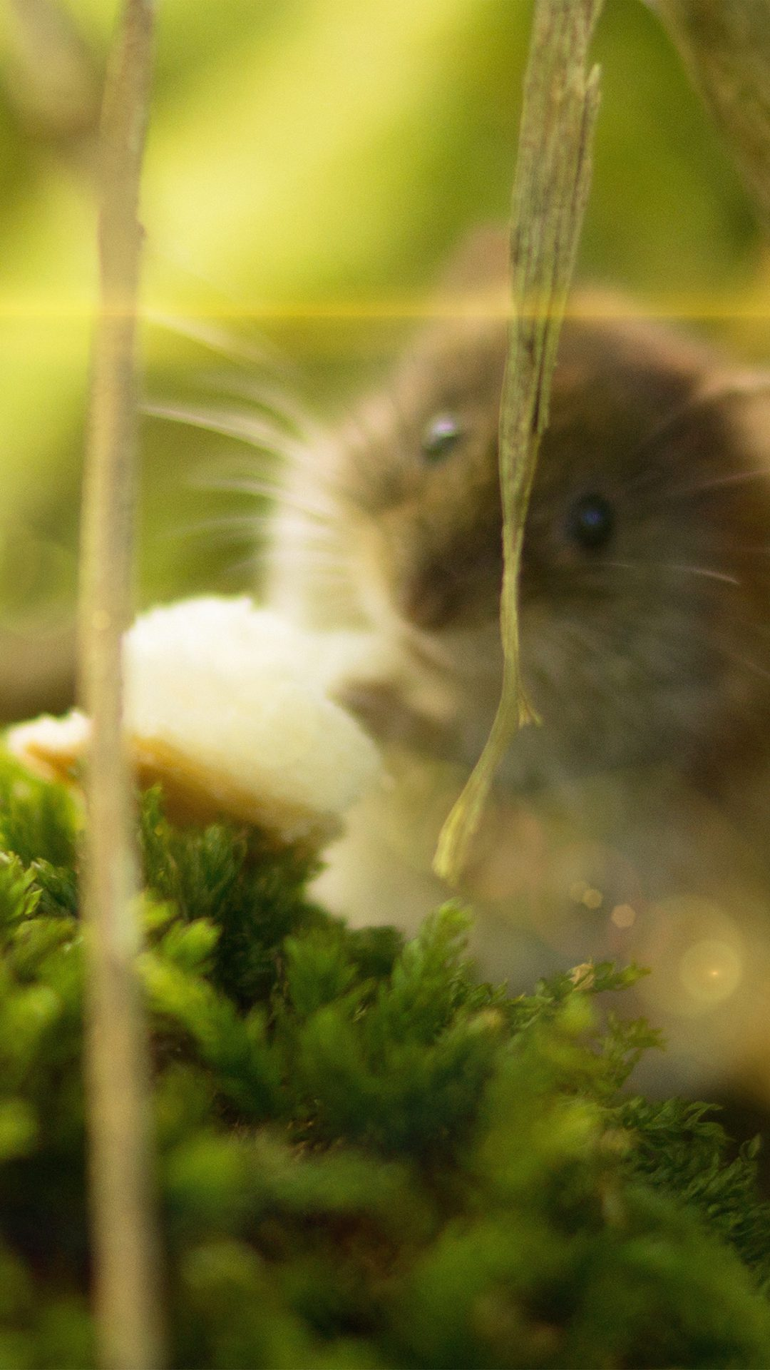 Cute Mouse Animal Nature Flare