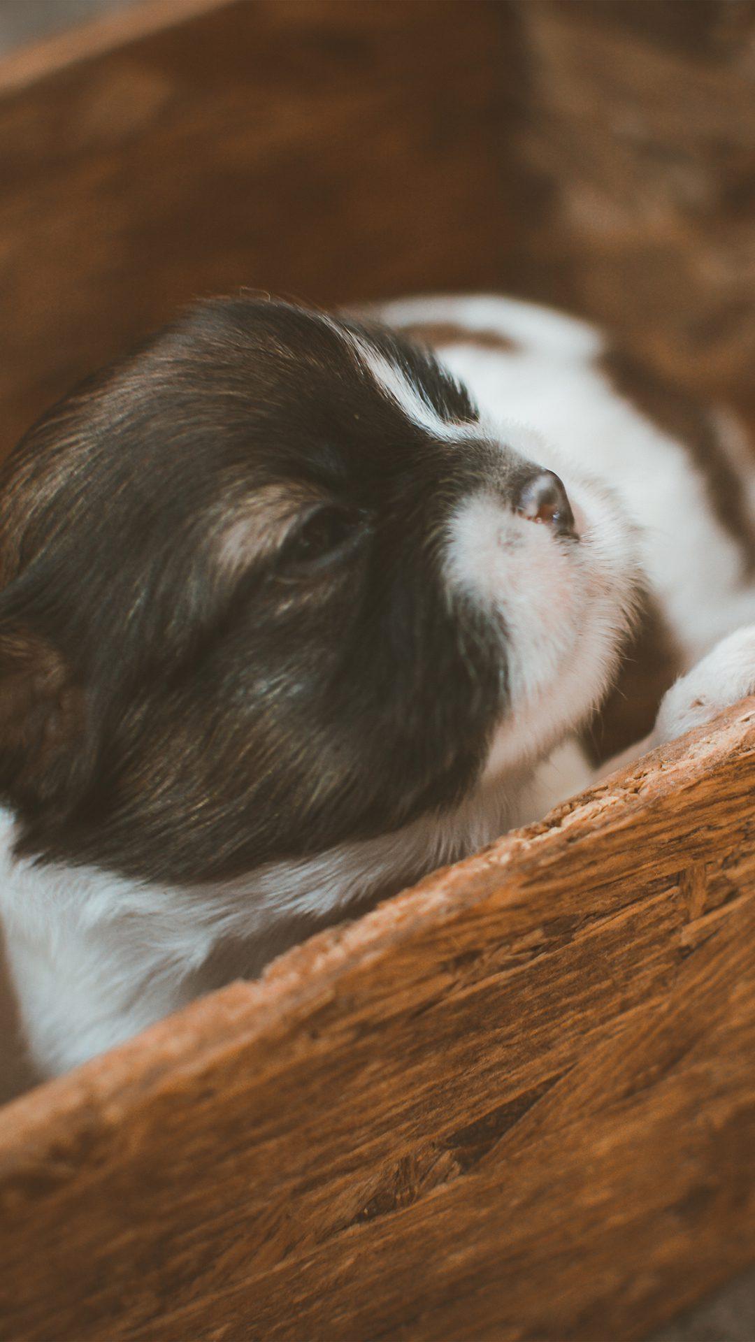 Cute Puppy Dog Animal Baby
