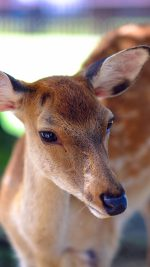 Deer Cute Animal Soft Nature