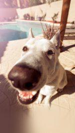 Dog Cute Face Animal Nature Nose