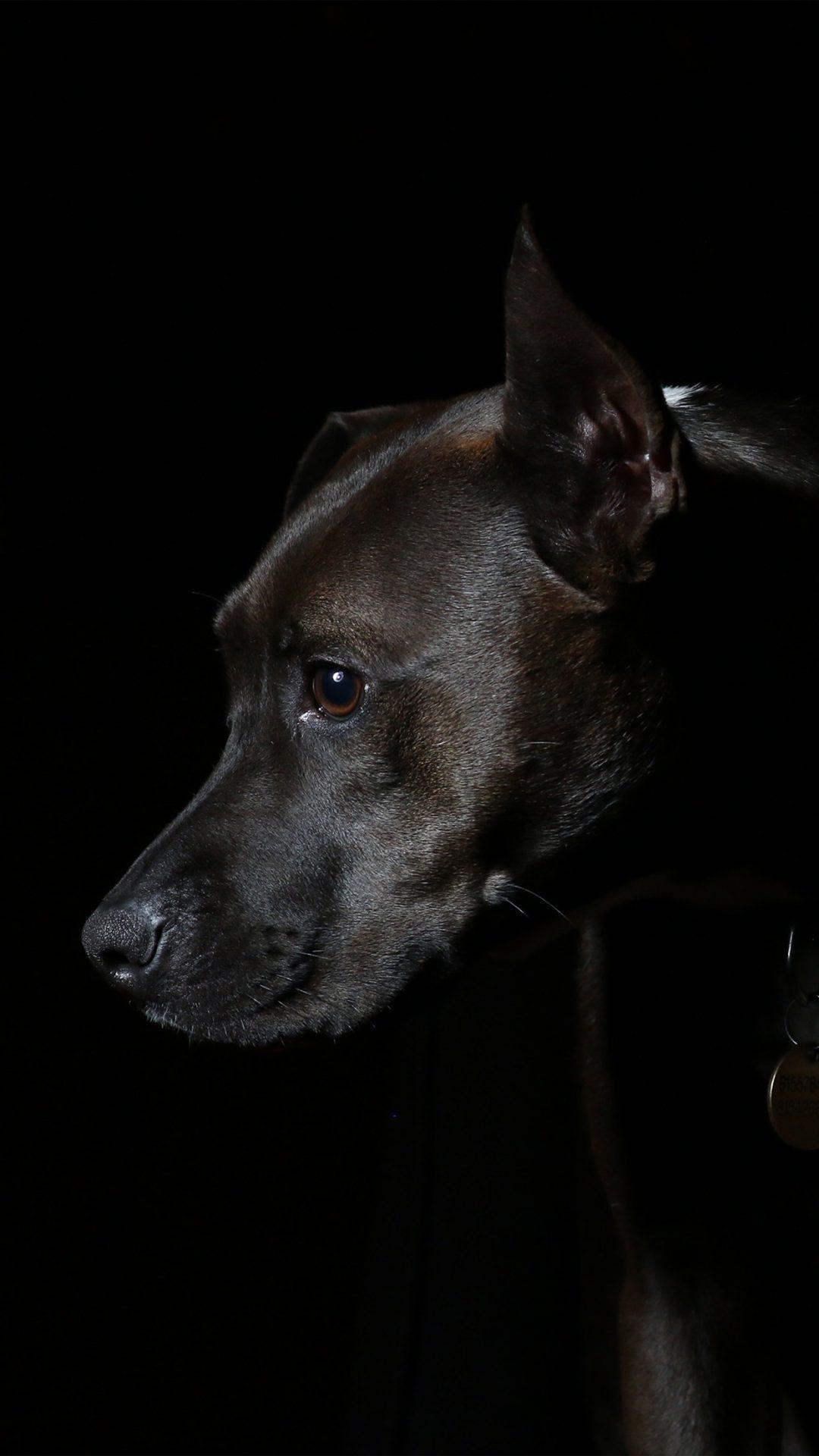 Dog Dark Animal