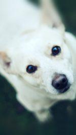 Doggy Watching White Animal Love