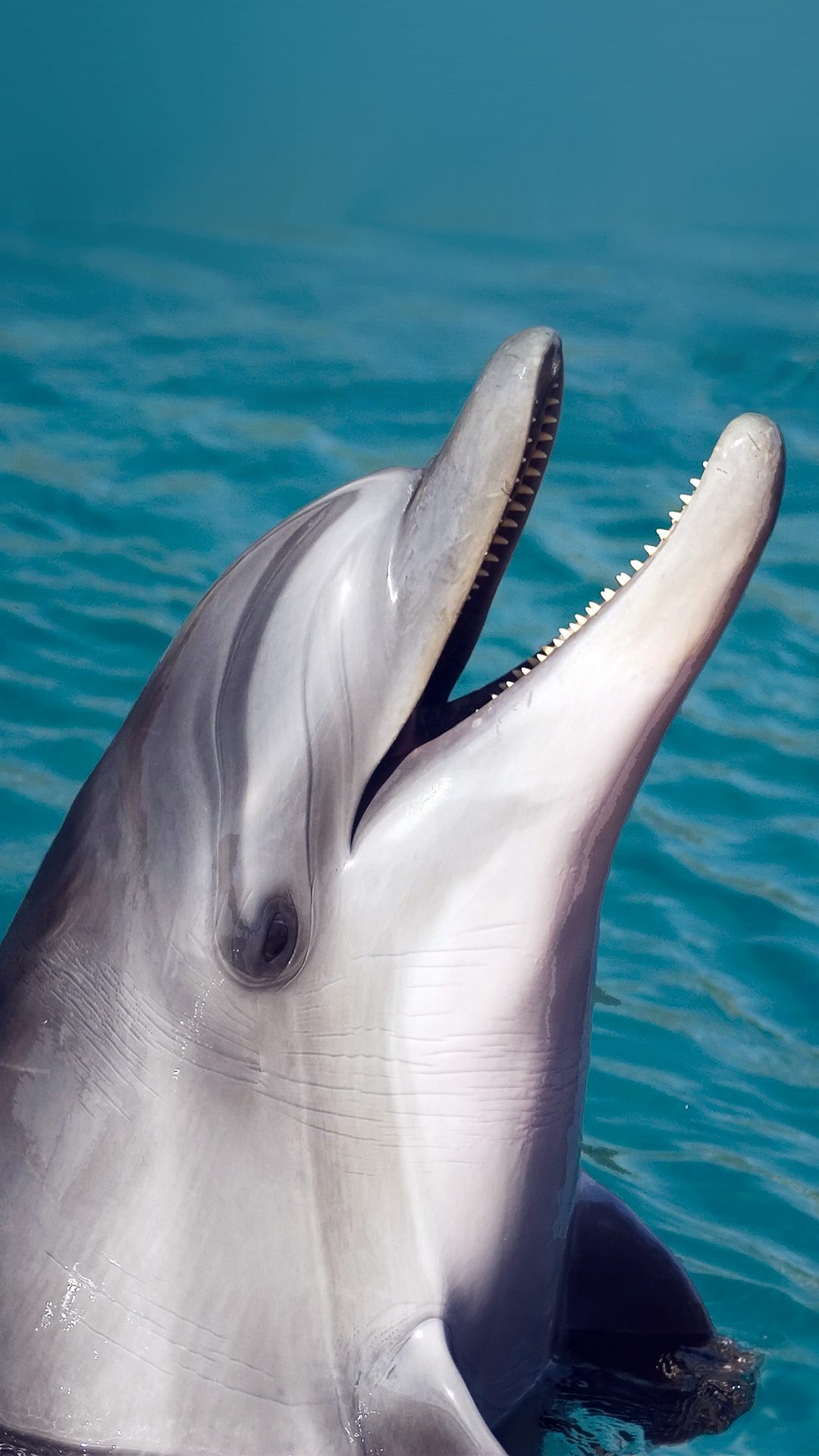 Dolphin Sea Animal Cute