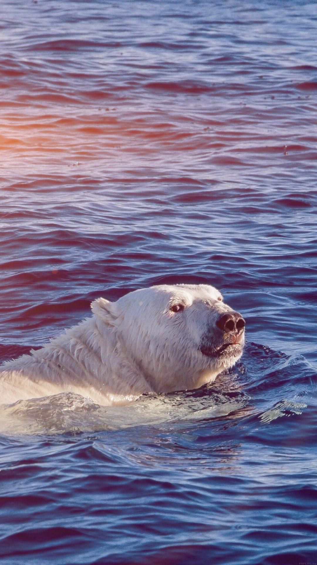 Dont Watch Me Swim Polar Bear Sea Animal Flare