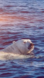 Dont Watch Me Swim Polar Bear Sea Animal Flare