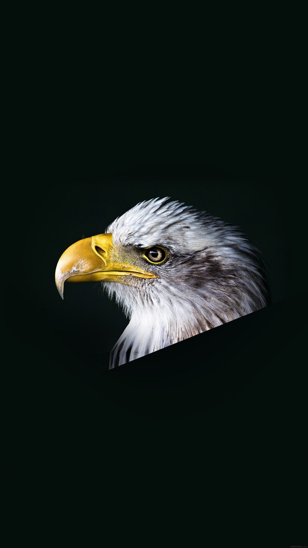 Eagle Dark Animal Bird Face