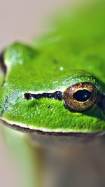 Eyes Frog Animal Lake Nature