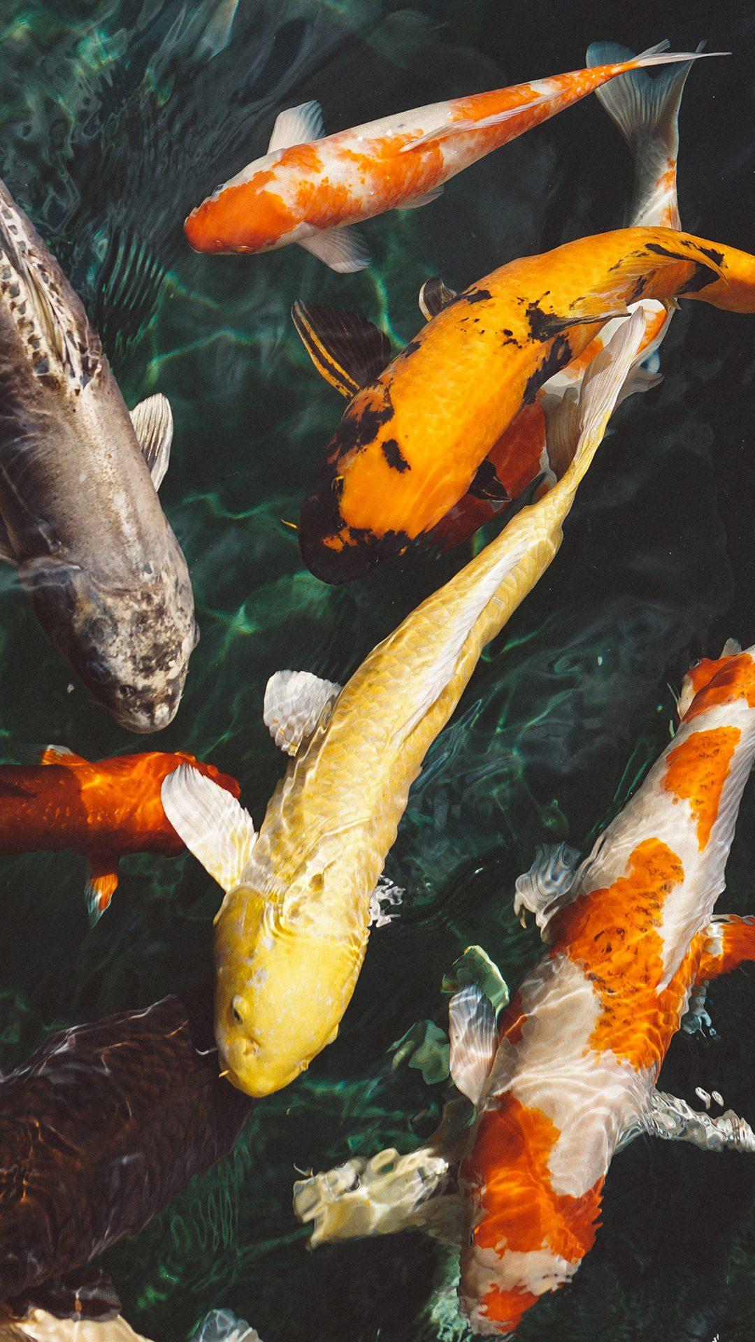 Fish Water Animal Swim