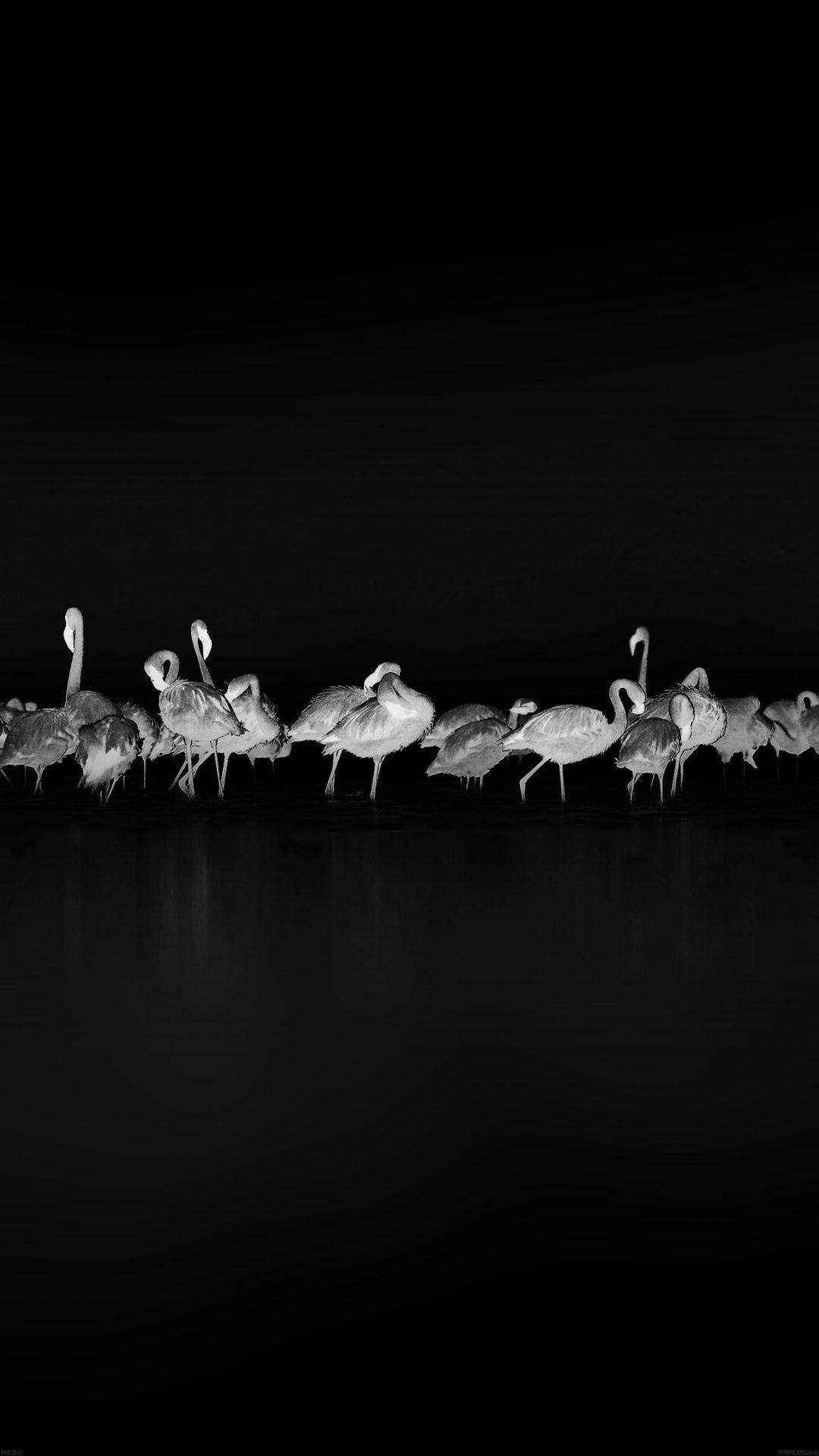 Flamingos Black Peace Animal Nature Birds