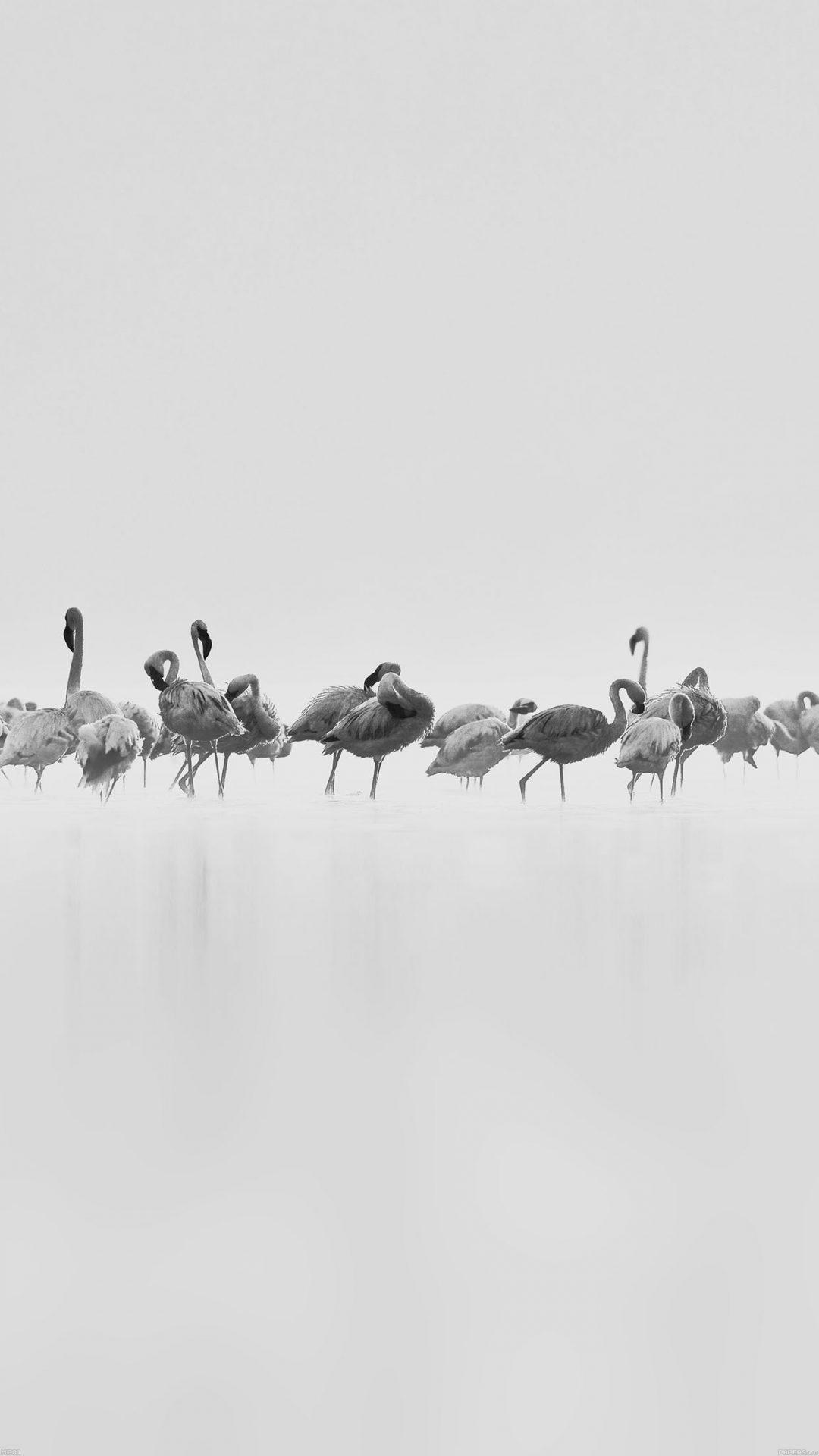 Flamingos White Peace Animal Nature Birds