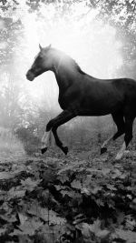 Horse Art Animal Fall Leaf Mountain Flare Dark Bw