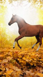 Horse Art Animal Fall Leaf Mountain Red