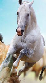 Horses Run Animal