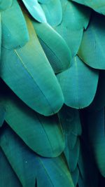 Meizu Feathre Green Nature Texture Animal Pattern