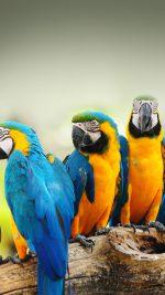 Mocking Bird Animal Nature