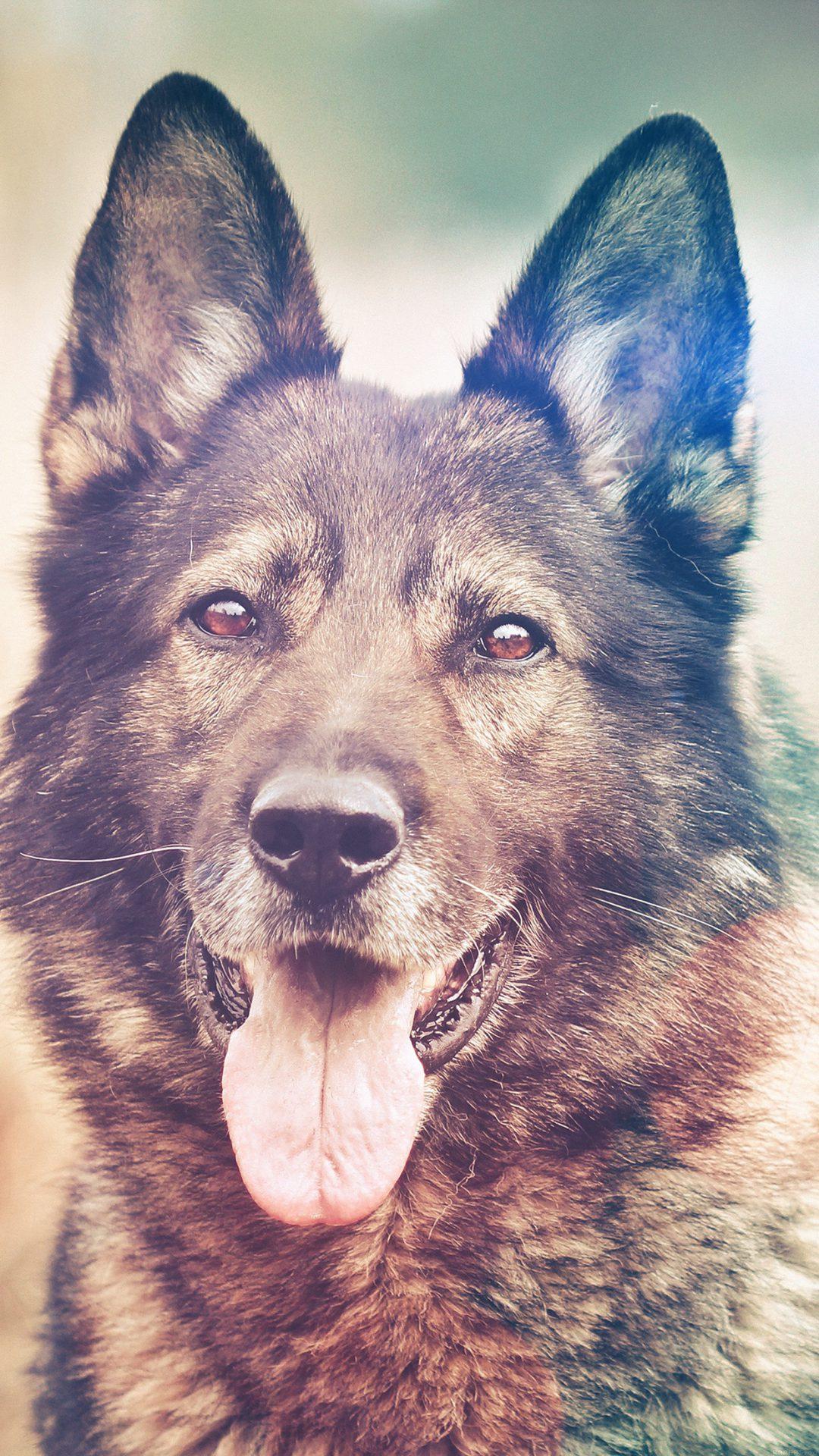 My Shepherds Dog Flare Smile Animal Nature