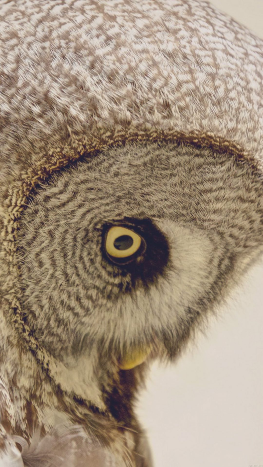 Owl Eye Animal Nature