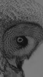 Owl Eye Bw Dark Animal Nature