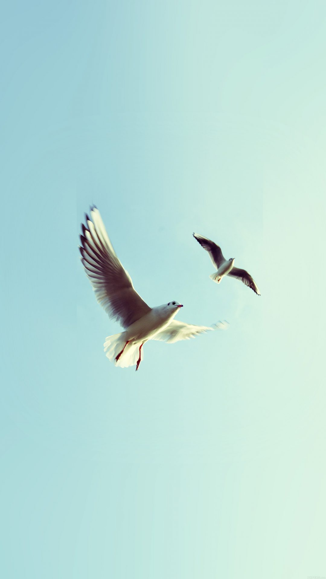 Pigeons Bird Fly Sky Animal Nature Minimal