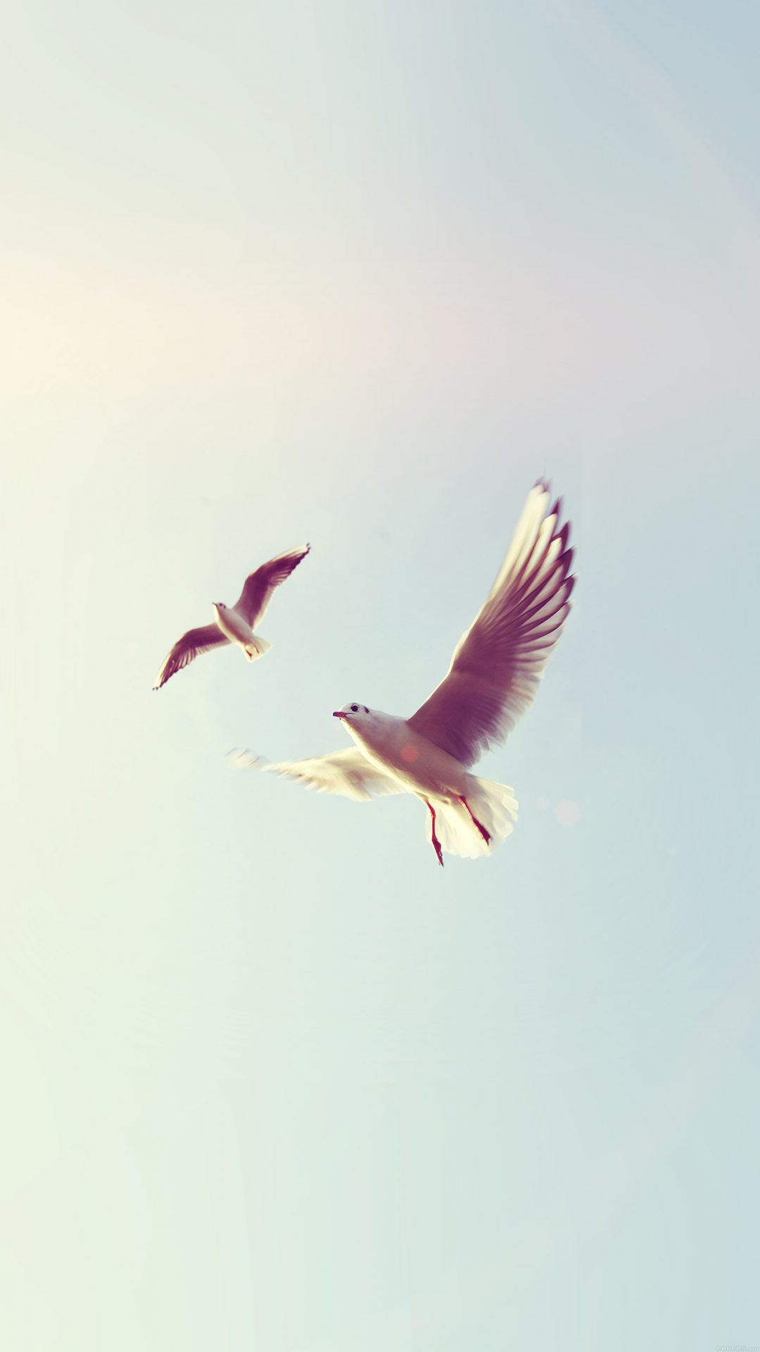 Pigeons Bird Fly Sky Animal Nature Minimal Flare