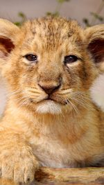 Proud Posing Cub Animal Nature