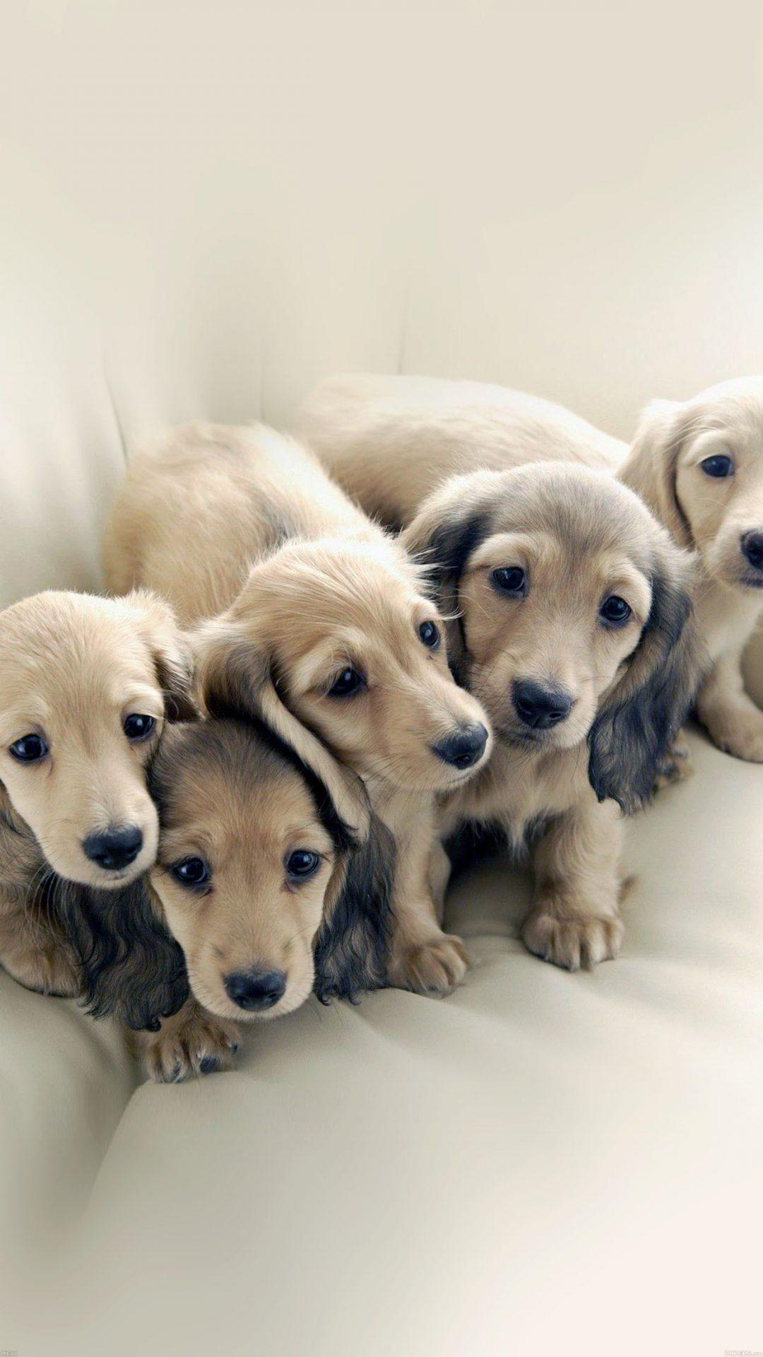 Puppy Dog Retriever Family Animal