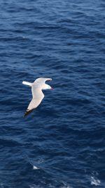 Seagull Bird Sea Ocean Animal Nature