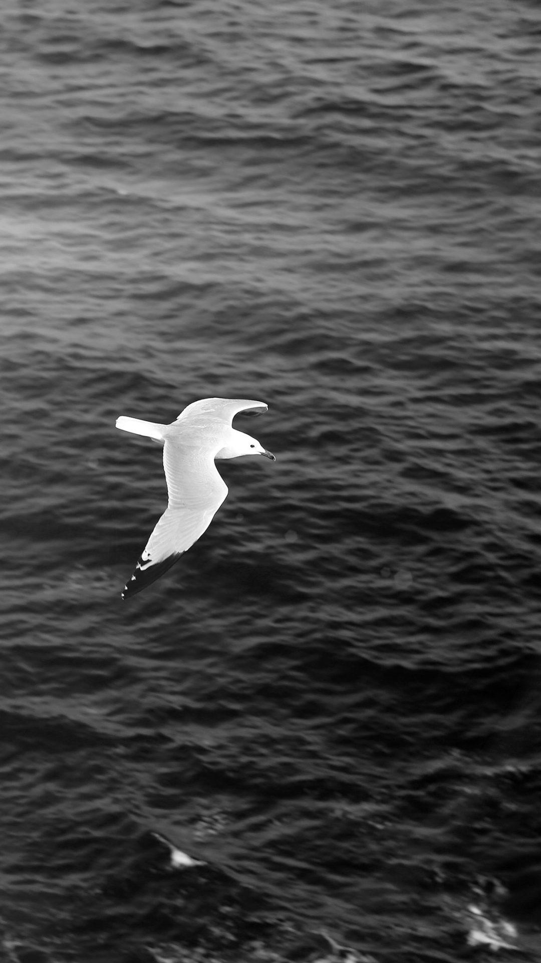 Seagull Bird Sea Ocean Animal Nature Dark