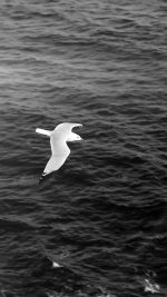 Seagull Bird Sea Ocean Animal Nature Dark