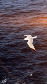Seagull Bird Sea Ocean Animal Nature Flare
