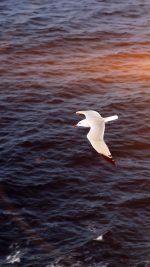 Seagull Bird Sea Ocean Animal Nature Flare